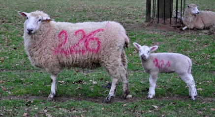 paul_f_ewe_and_lamb